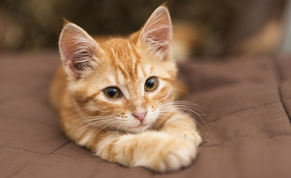 Do these 3 kitten photos help you focus? That's what a 2012 study says.