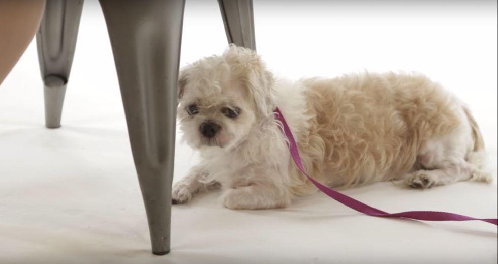 This dog rescue PSA hilariously slams Ashley Madison cheaters, wins the Internet.