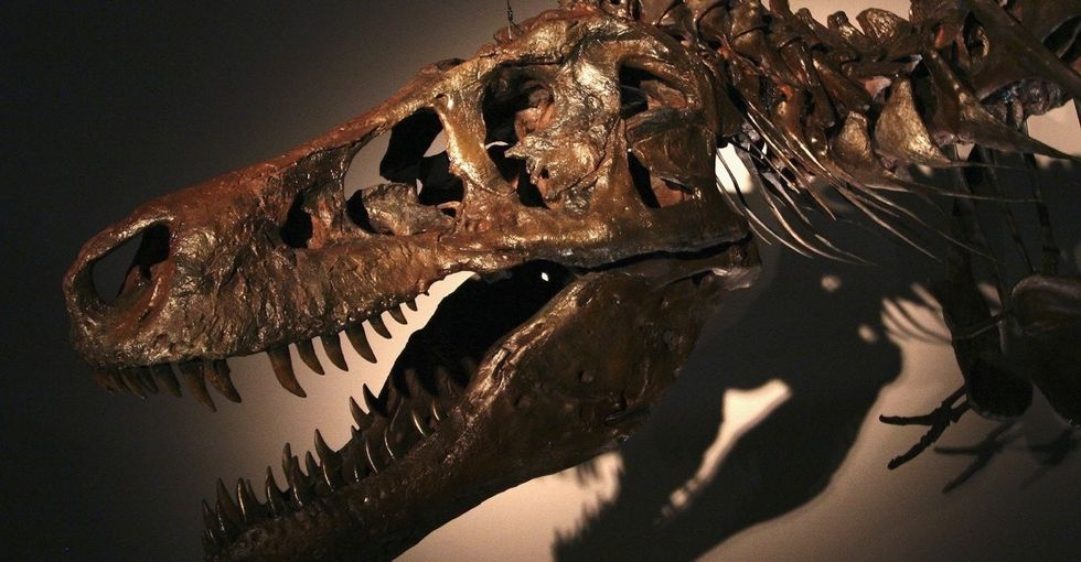 25 years ago, this dino was discovered. $8.4 million later, it was ready for the world to see.