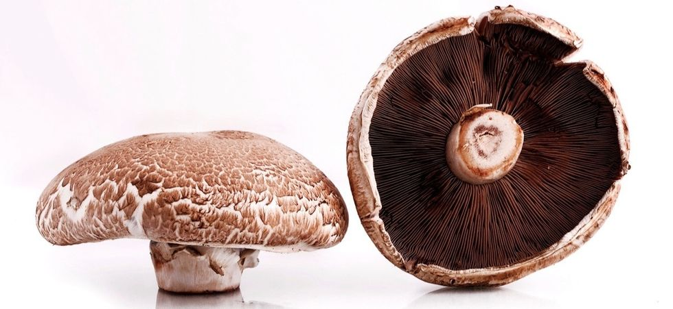 What do portobello mushrooms have to do with better batteries? Everything.