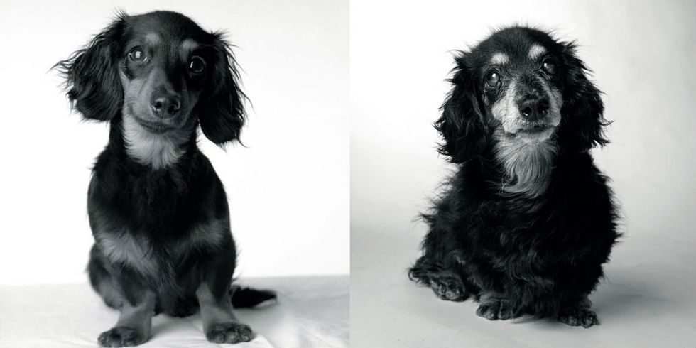 A stunning photo project shows how dogs age through the years.
