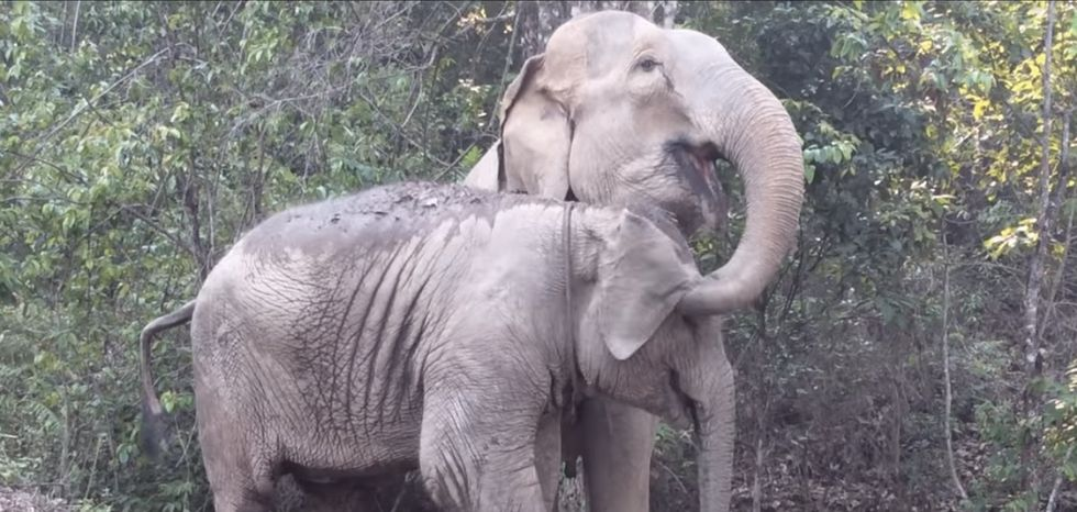 What happens when this 7-year-old elephant reunites with its mom? Love wins.