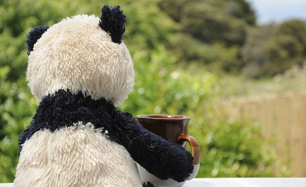 There's a travel agency that will take your stuffed animals on vacation.