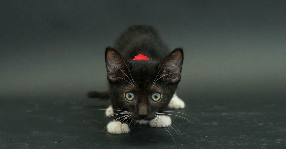 A lot of people are afraid of adopting black cats. Here are 5 adorable ones that you could get.