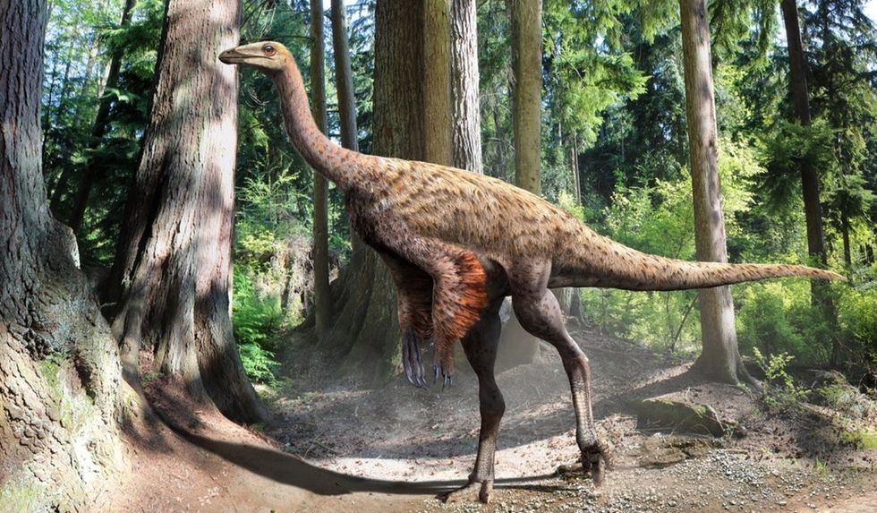 A college student found prehistoric proof of an evolutionary connection between dinosaurs and birds.