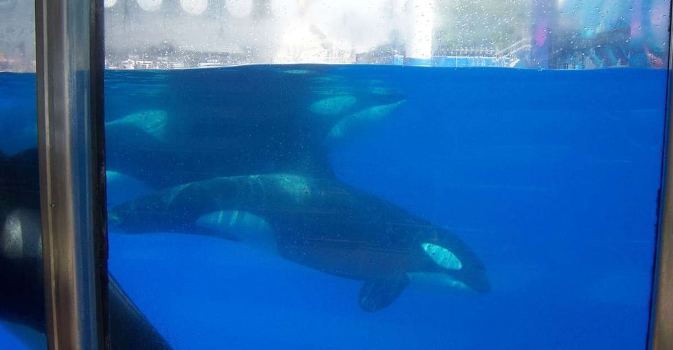 2 years after 'Blackfish,' SeaWorld is finally listening to criticism of its orca shows.