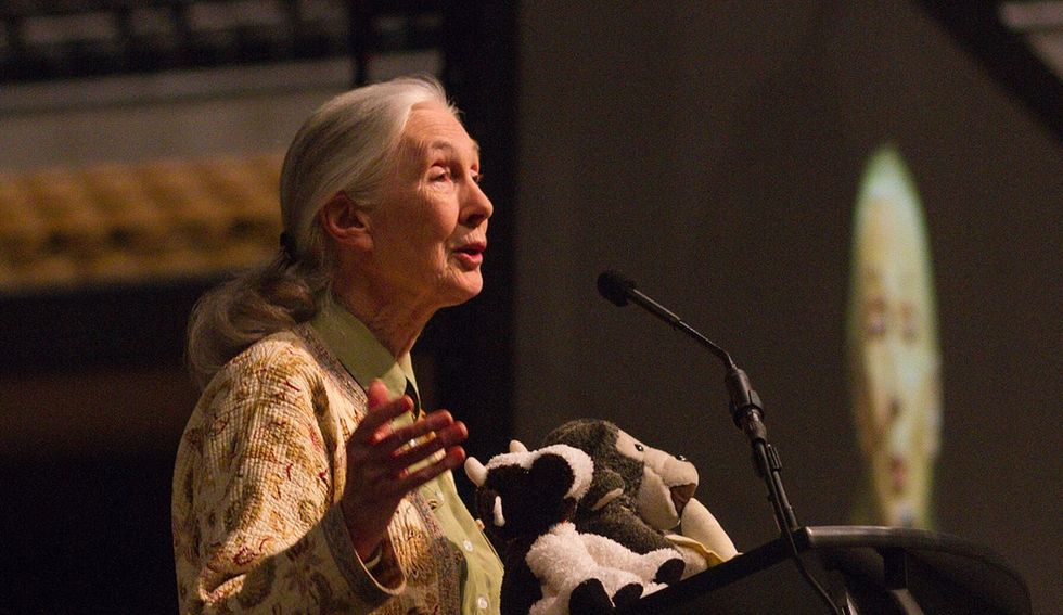 Jane Goodall, along with 30 other world leaders, tells us not to lose hope over deforestation.