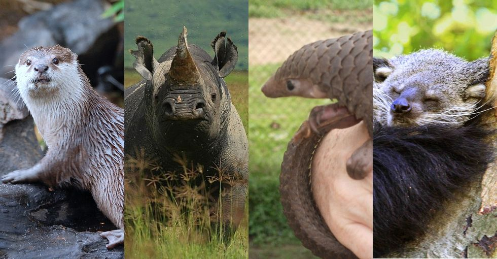 One of these animals may have the power to save the other 3. Do you know who it is?