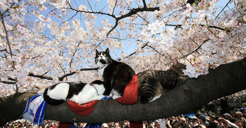 Introducing hanami: the Japanese tradition that'll make you fall in love with nature.
