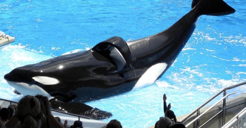 Tilikum, SeaWorld orca whale and subject of 'Blackfish,' dies at 35.