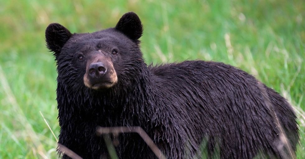 17 totally true facts about black bears that'll bring the warm and fuzzies.