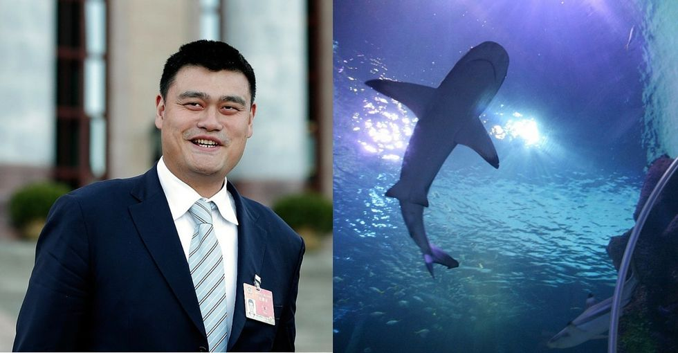 Thanks to Yao Ming, killing sharks for their fins is down 50%. And he's just getting started.