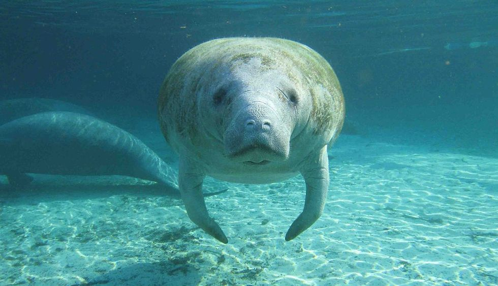 You're probably already a manatee fan. If not, here are 22 reasons to become one.