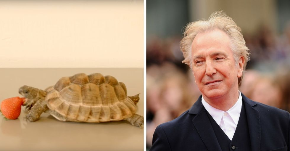 Remembering one of Alan Rickman's final roles — a student project. To help refugees.