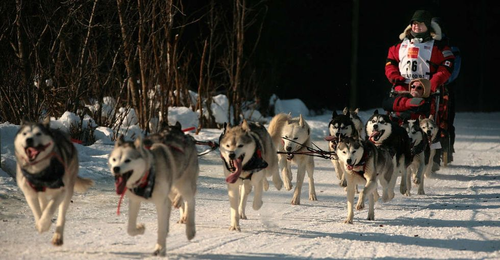 The biggest dog sledding race in the world is having major problems. You already know why.