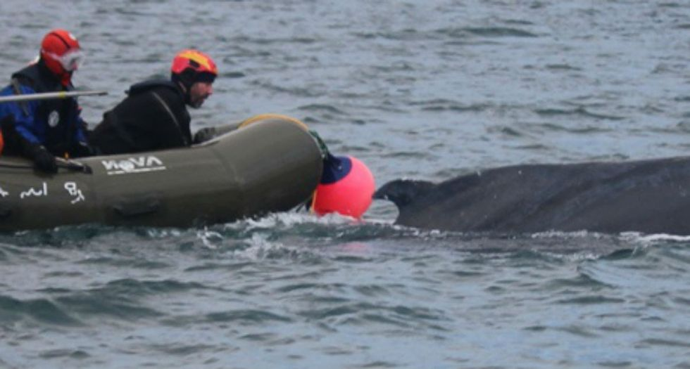 Why on Earth would 4 men on an inflatable raft try to rodeo a humpback whale? To save it.
