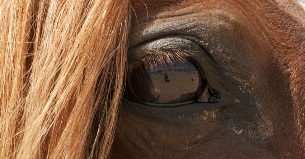 The fascinating way a horse reacts when it knows you're angry.