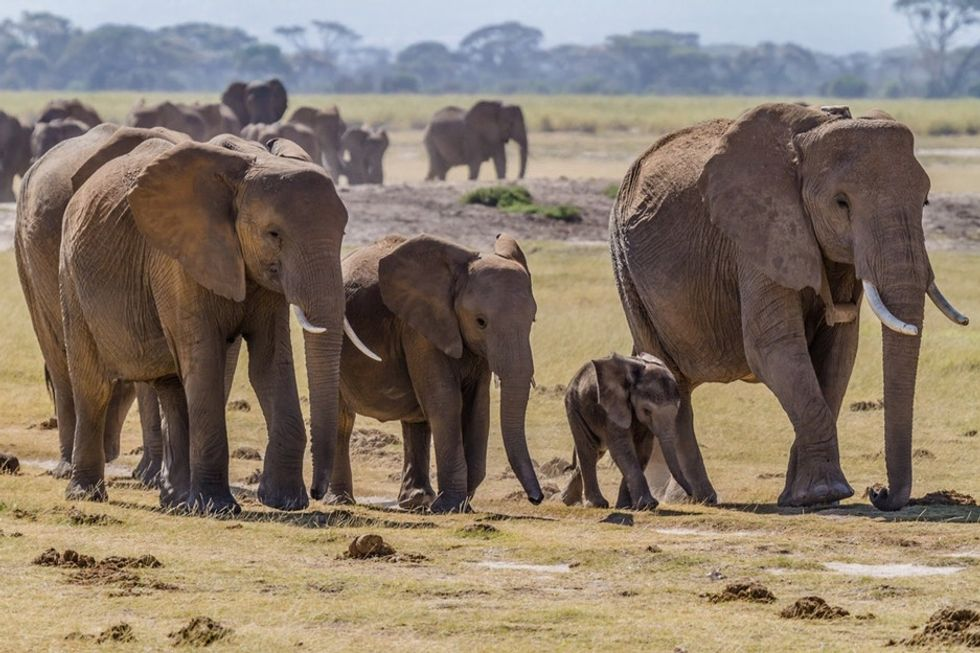 Most animals don't have grandmas. But elephants do. And what Granny does is awesome.