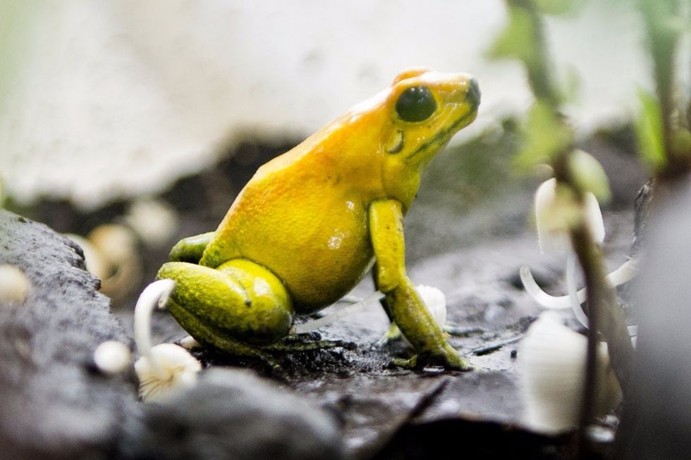 29 awesome frogs celebrating Leap Day.
