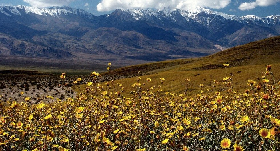 See these amazing photos as Death Valley prepares for a superbloom.