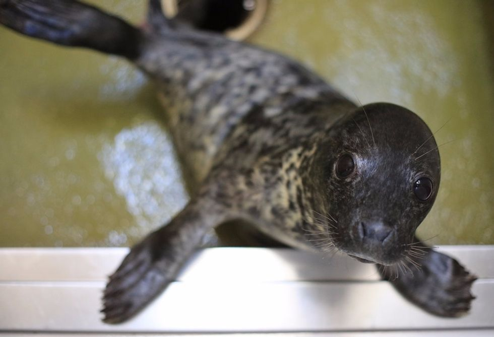 35 baby seals were rescued, and their amazing names are getting a ton of attention.