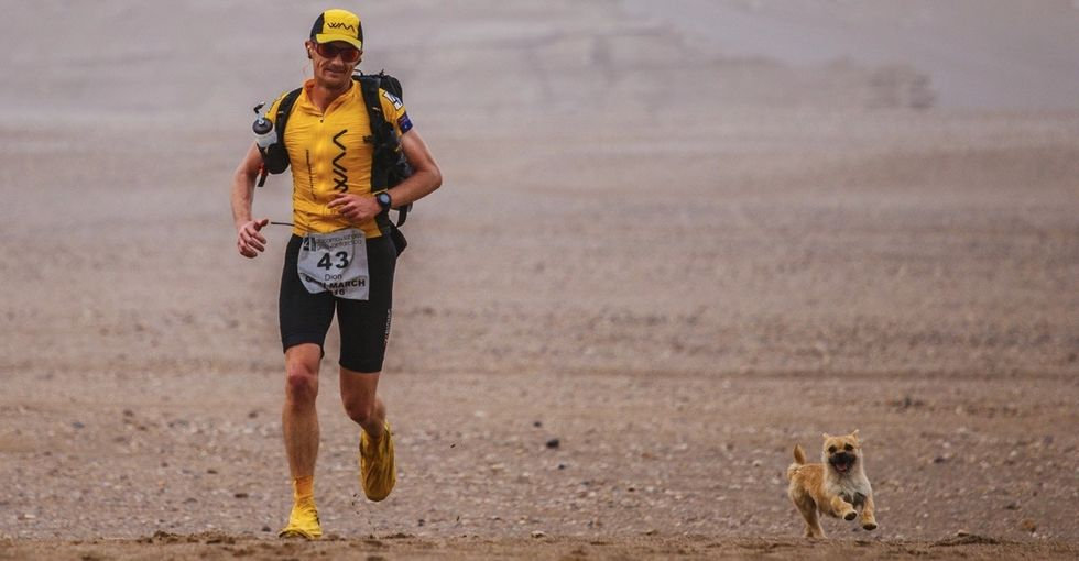 This adorable stray dog found a new home after following a runner into a race.