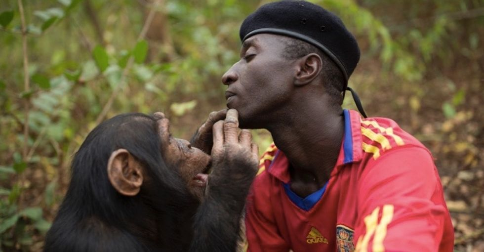 Take an inside look at a home dedicated to saving orphaned chimpanzees.
