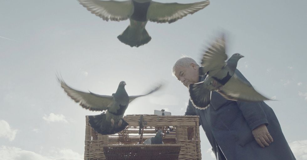 You have to see these pigeons with tiny backpacks. They're air quality superheroes.