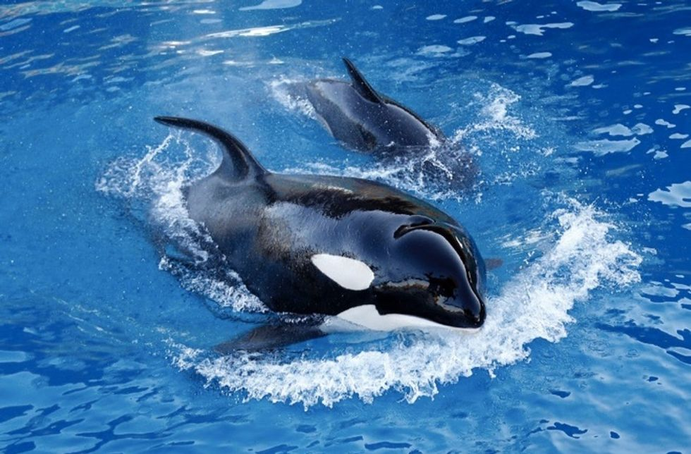 How SeaWorld's empire collapsed — a  tragedy in 3 acts.