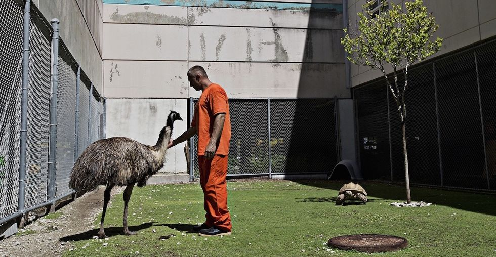 See incredible photos of a jail where inmates and abandoned animals find a second chance.