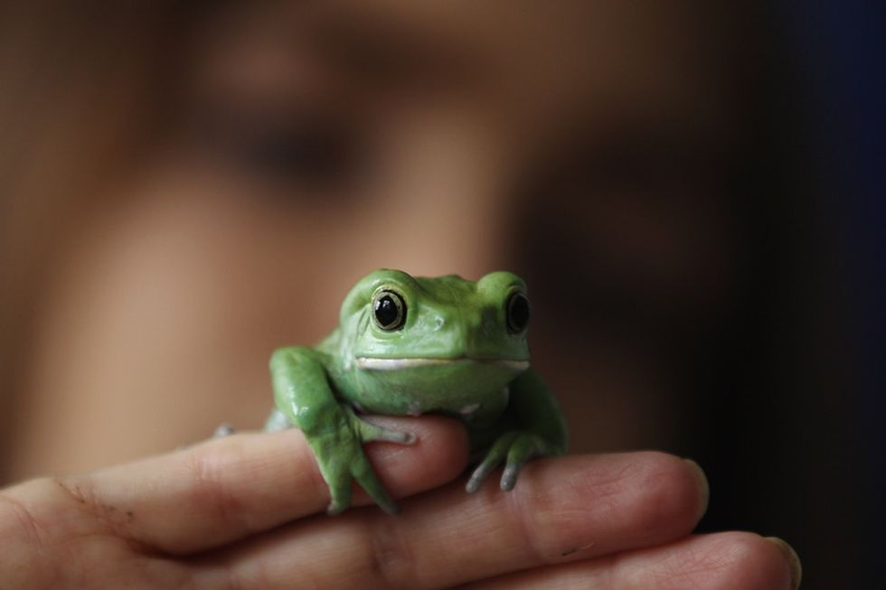 The story of one frog's epic journey to the frog hospital.