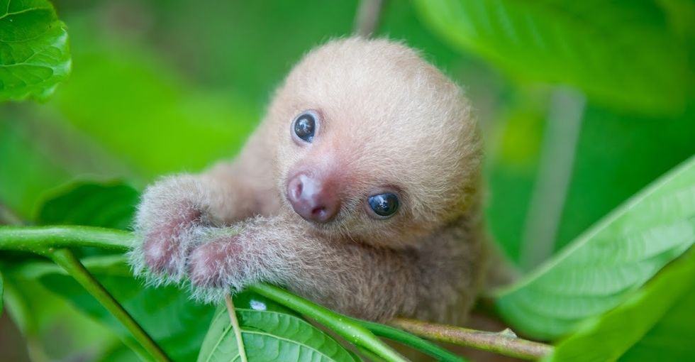 Welcome to the Sloth Institute, a home for wayward baby sloths.