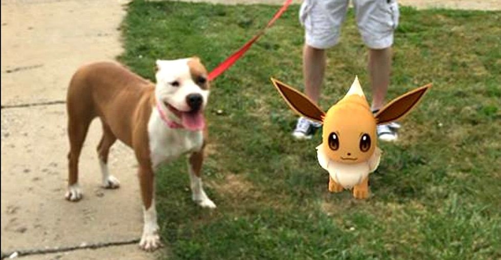 How Pokemon Go is helping this shelter get its dogs walked.