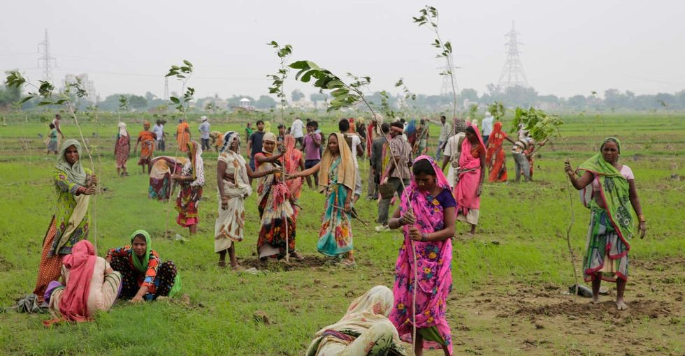 India just planted 50 million trees to take on climate change.