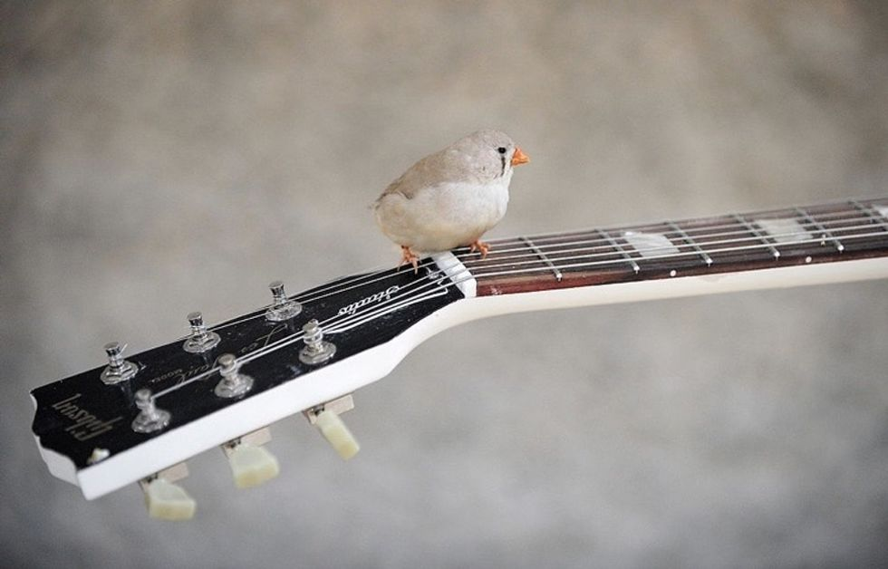 Incredibly, zebra finches have started warning their babies about global warming.