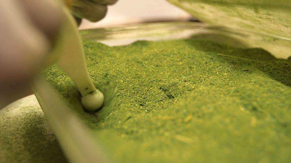Moringa is known as 'The Miracle Tree,' and its powers are spreading worldwide.