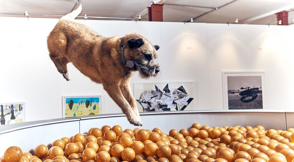 The artist behind the first art exhibit for dogs just wanted everyone to have fun.