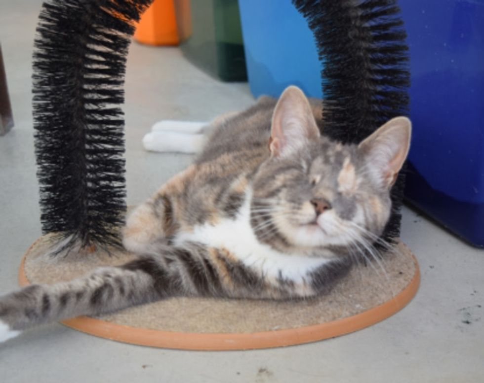 Here's why you need to take a tour of this blind cat sanctuary.