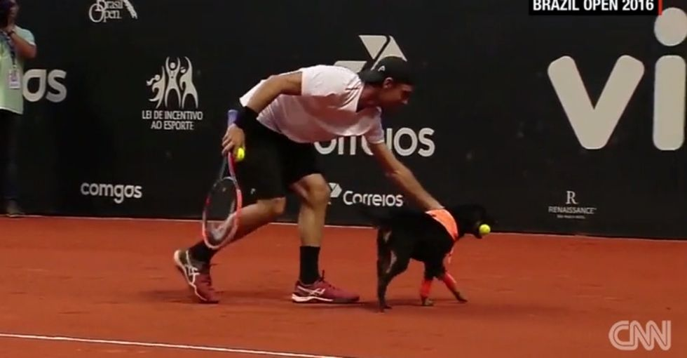These shelter dogs were 'ball boys' at the Brazil Open and stole the show.