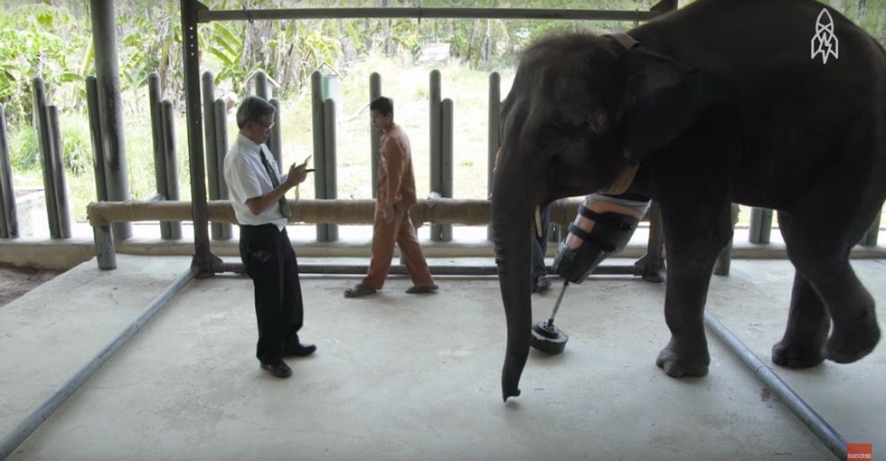 This heartwarming video shows an elephant's journey after stepping on a land mine.
