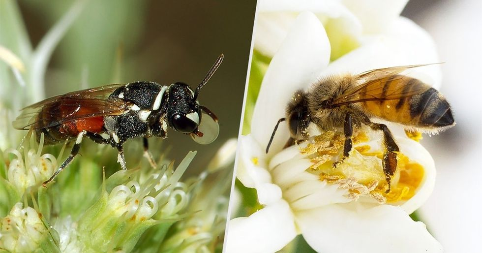 3 reasons to not panic about those endangered bees, and 3 things to do instead.