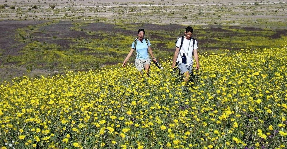 Cheer someone up today with these 14 joyful pictures of Death Valley's superbloom.