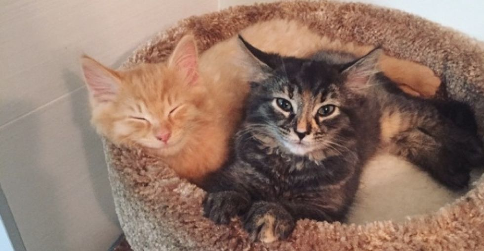11 adorable photos that prove kitty sibling bonding is a very real thing.