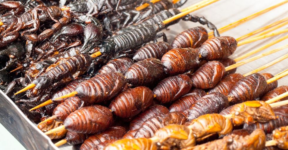 Hey, America: Edible insects just might be the next tasty taboo headed for your plate.