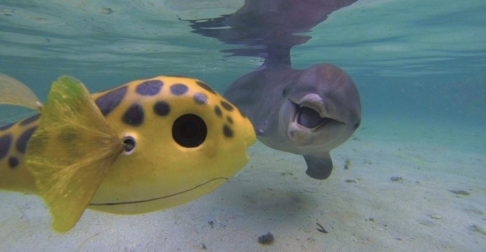 Cute robots are helping us secretly record animal behavior like never before.