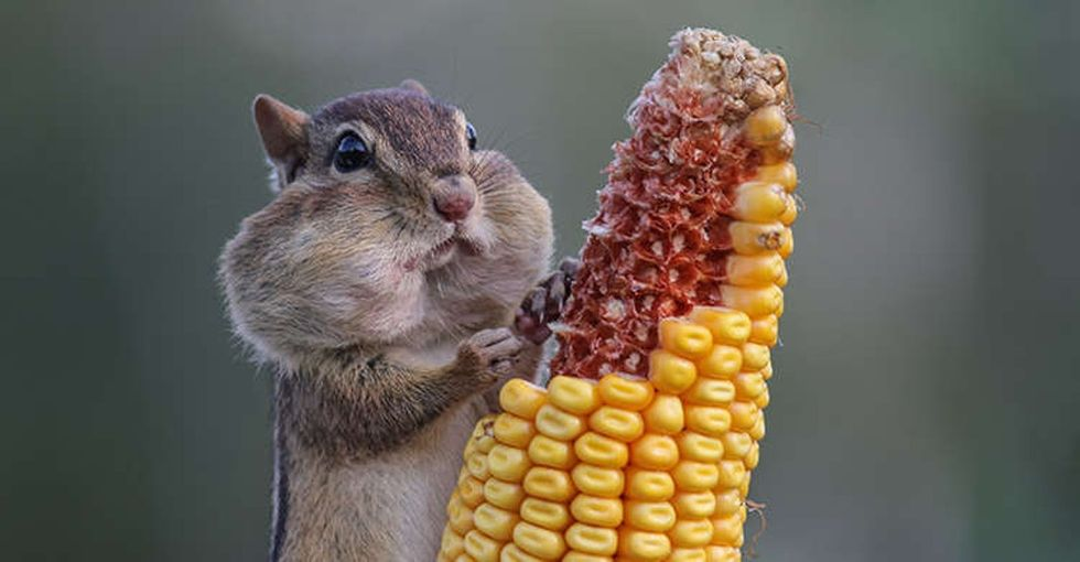 A contest was held to find this year's funniest animal photo. Here are 15 of the best.