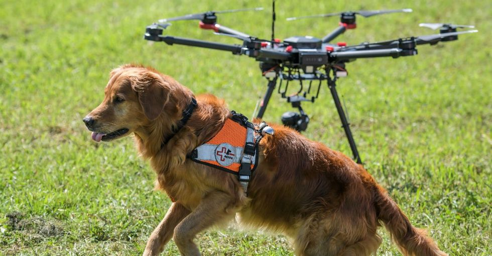 How dogs and drones are slashing rescue times in thewake of natural disaster.
