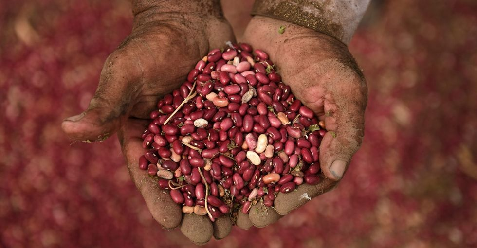 16 reasons beans may be the food of the future.