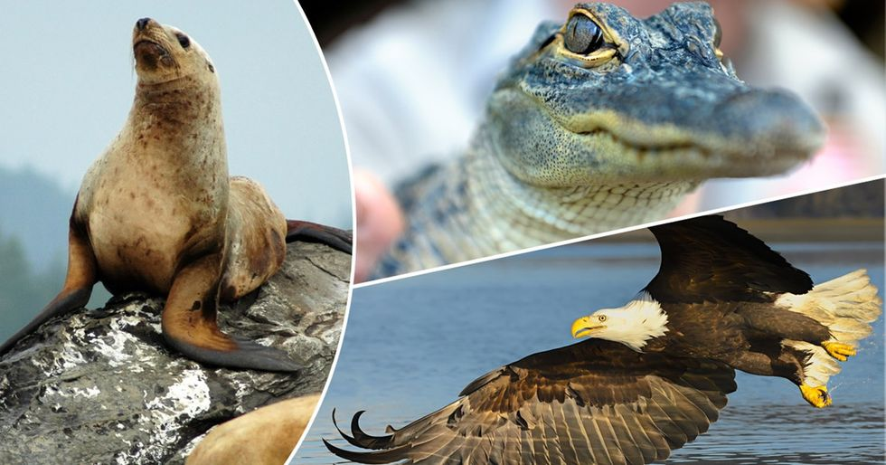 Animal success stories that will make you call your senator to protect endangered species.