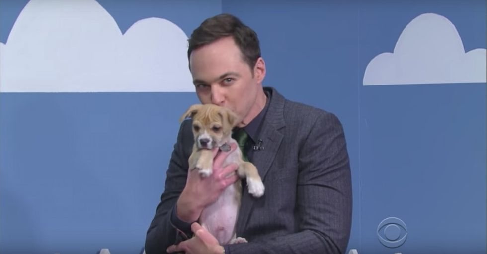 Watch Jim Parsons tell white lies to help puppies find forever homes.